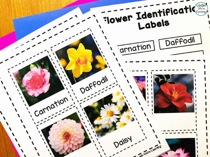 Learning to Name Flowers with Kids