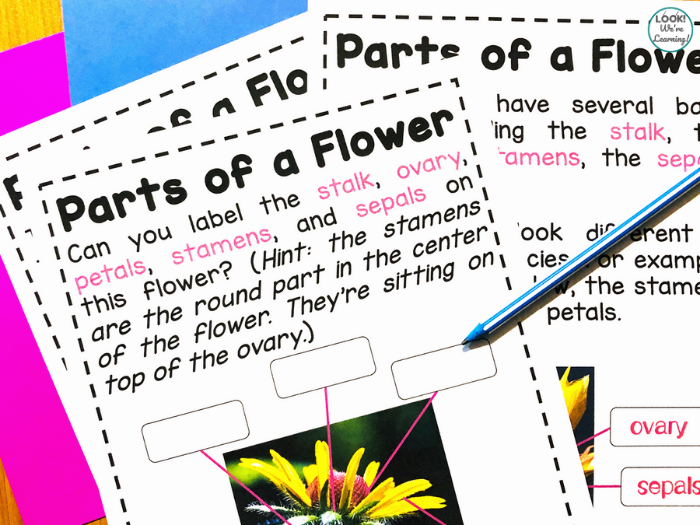 Parts of a Flower Activity for Kids