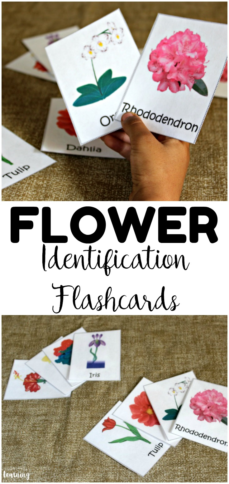 These printable flower flashcards are so fun for a spring nature walk! Help kids learn about the common flower species all around them!
