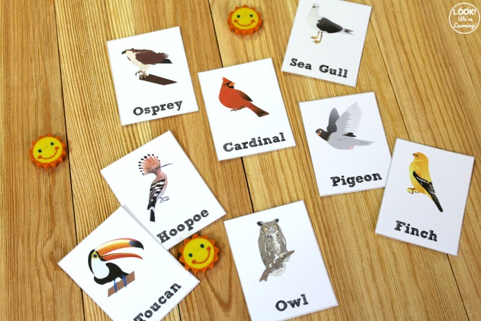 Bird Identification Flashcards for Elementary Students