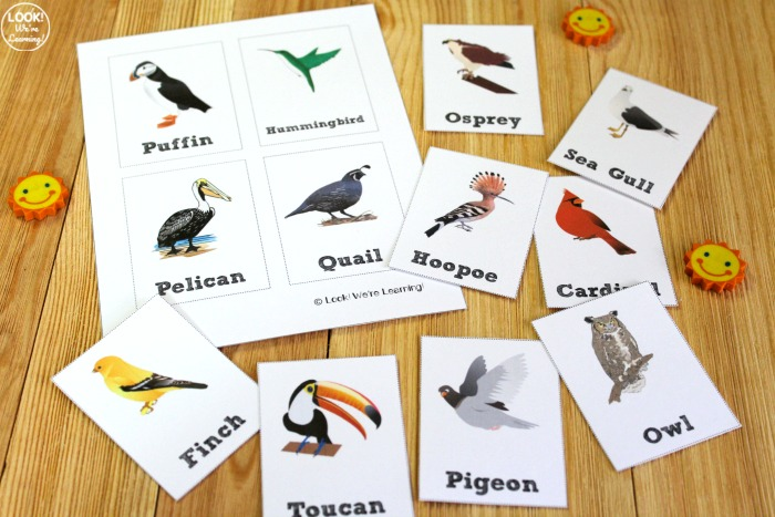 Bird Identification Flashcards for Kids