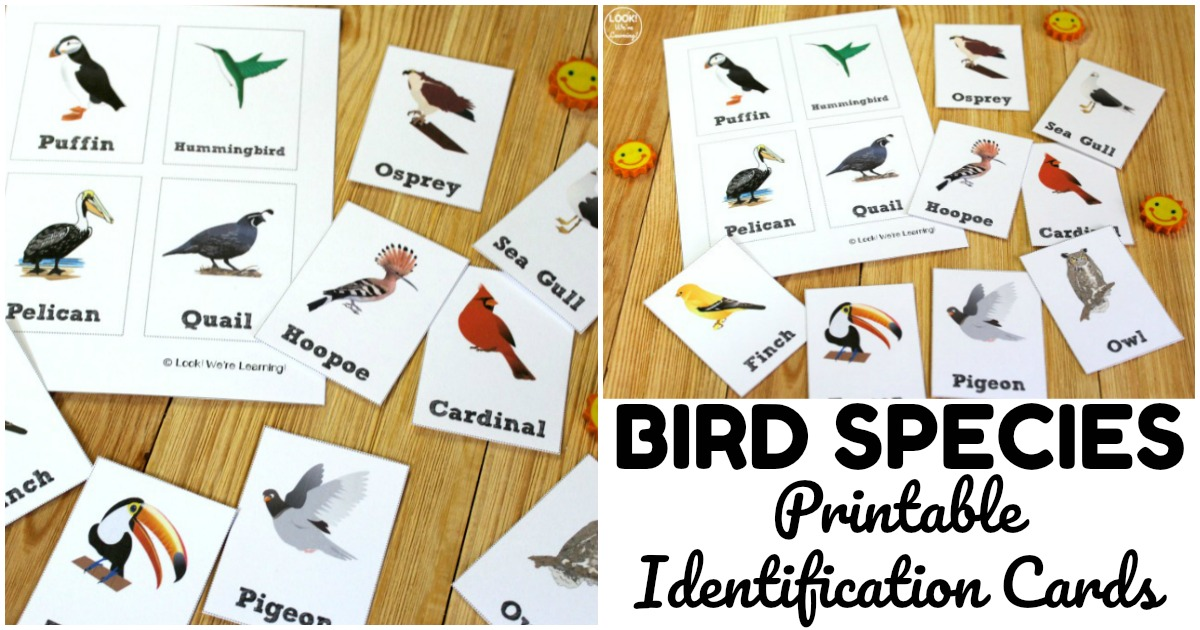 Fun Printable Bird Identification Cards for Kids