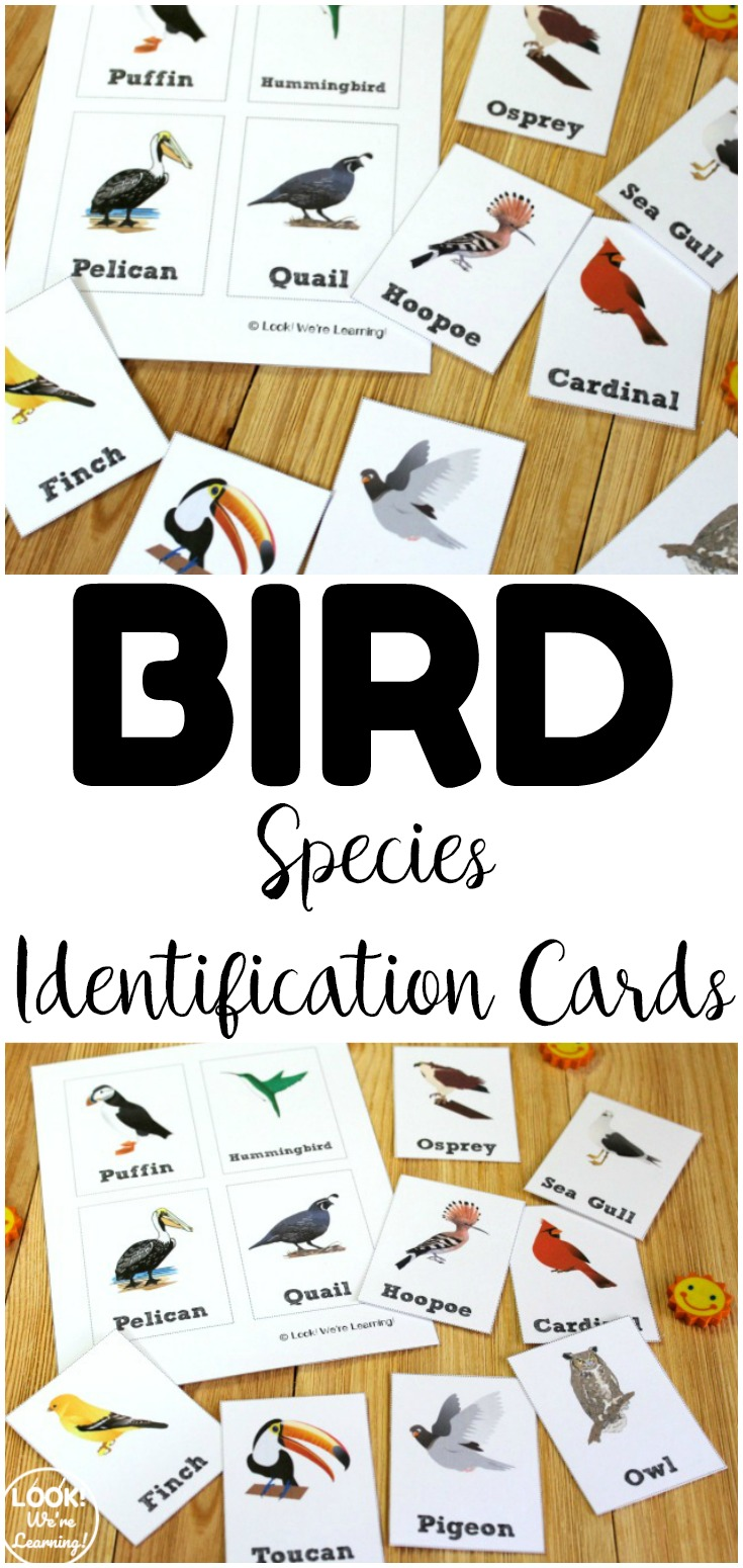 These printable bird identification cards are a wonderful addition to a spring science lesson! Use them at science centers for quick review!