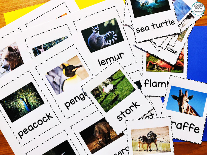 Zoo Animal Flashcards for Early Learners