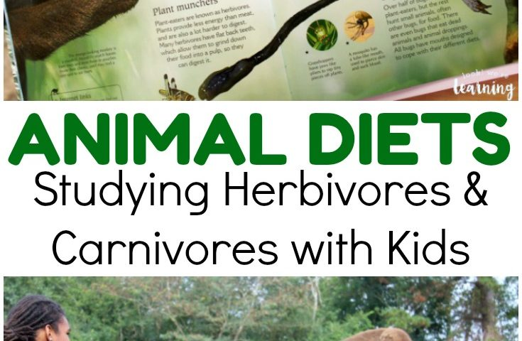 Learning about Animal Diets with Kids