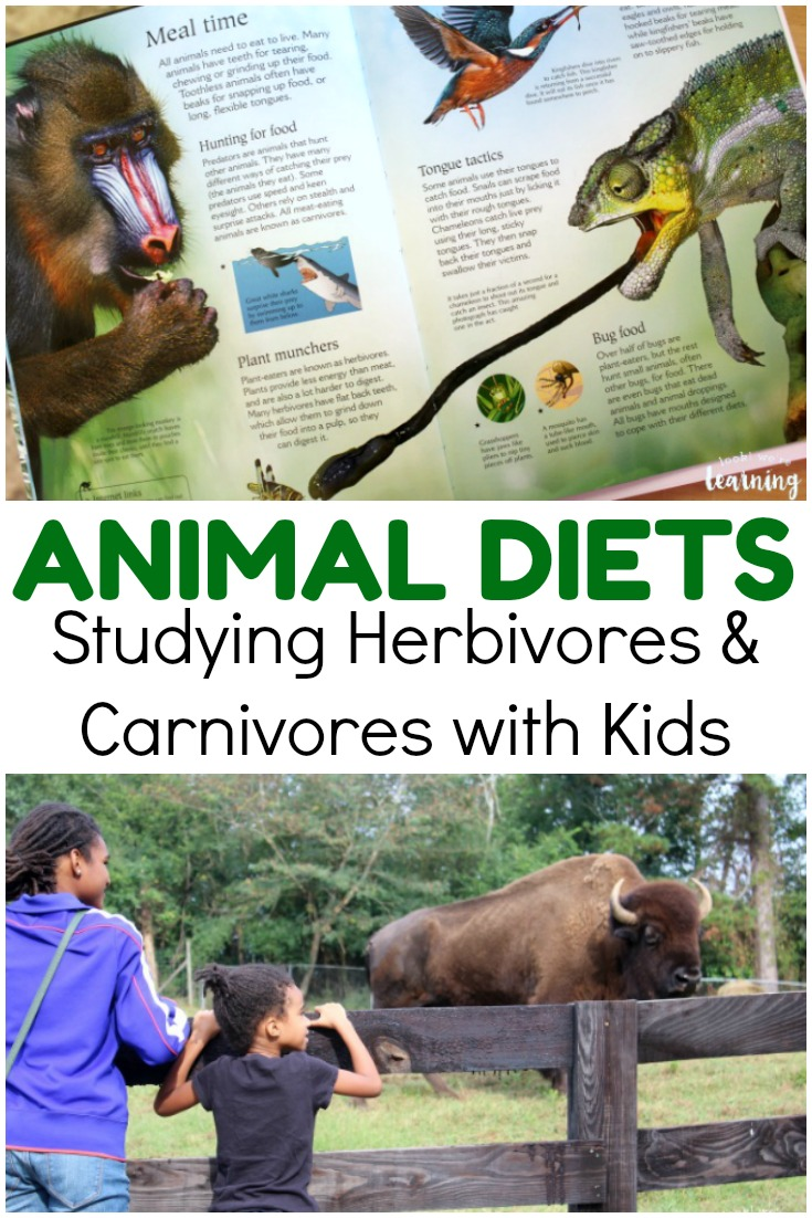 Animal science isn't complete without a lesson on animal diets. See how we learned about herbivores and carnivores with BookShark!