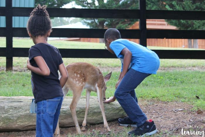 Feeding Animals at a Wildlife Refuge