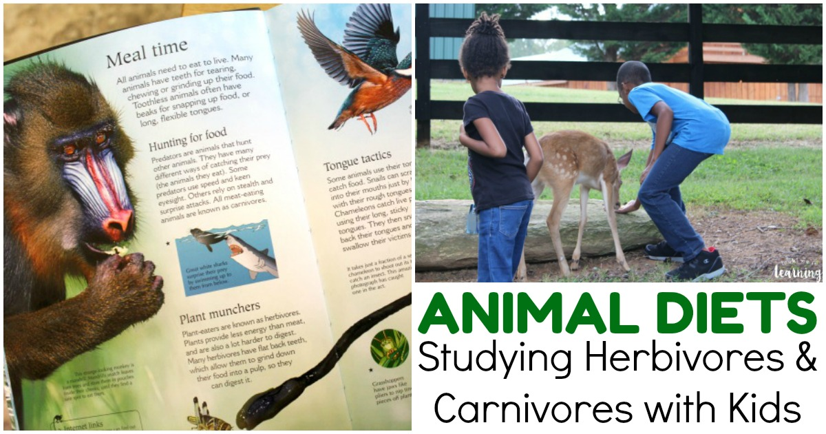 Learning about Animal Diets with BookShark