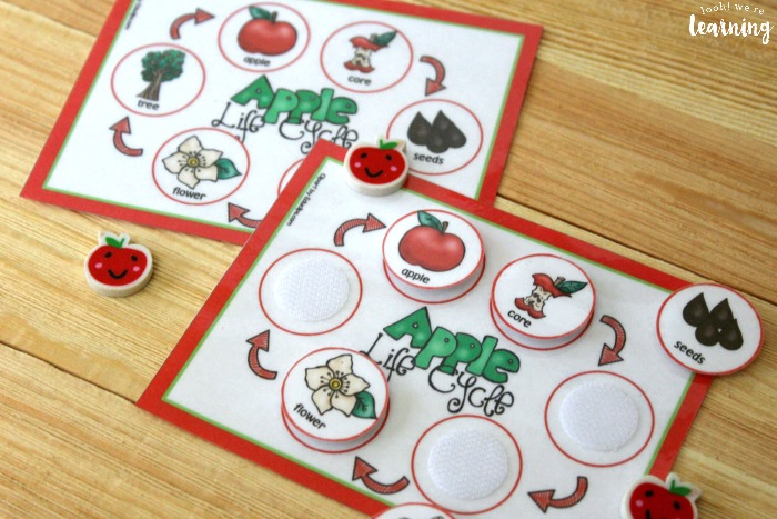 Apple Life Cycle Sequencing Activity for Kids