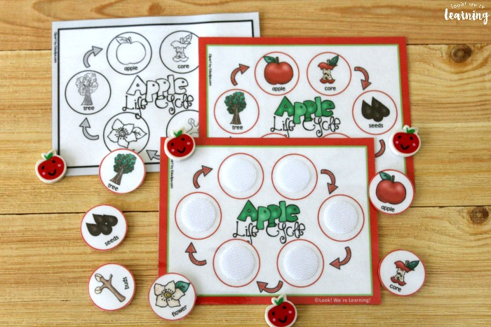 Apple Life Cycle Sequencing Activity