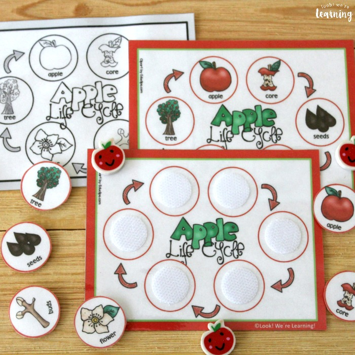 Apple Life Cycle Sequencing Lesson