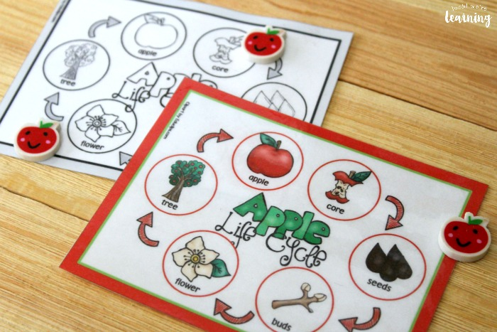 Apple Life Cycle Sequencing Mat