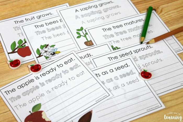 Apple Tree Life Cycle Sentence Writing Activity