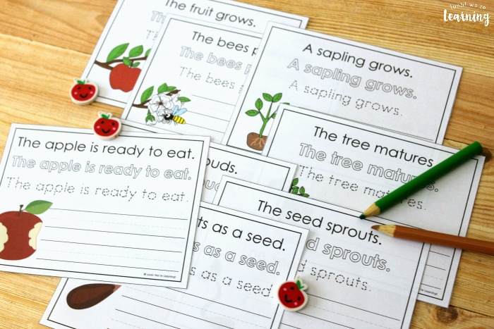 Apple Tree Life Cycle Sentence Writing Practice