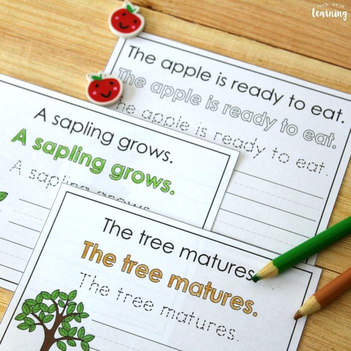 Apple Tree Life Cycle Sentence Writing