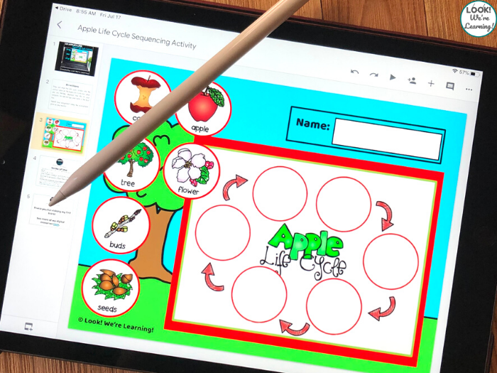 Digital Apple Life Cycle Sequencing Lesson