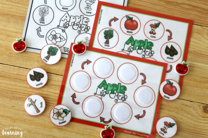 Printable Apple Life Cycle Sequencing Activity