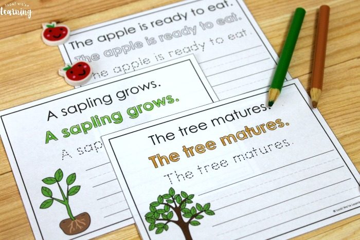 Printable Apple Tree Life Cycle Sentence Writing