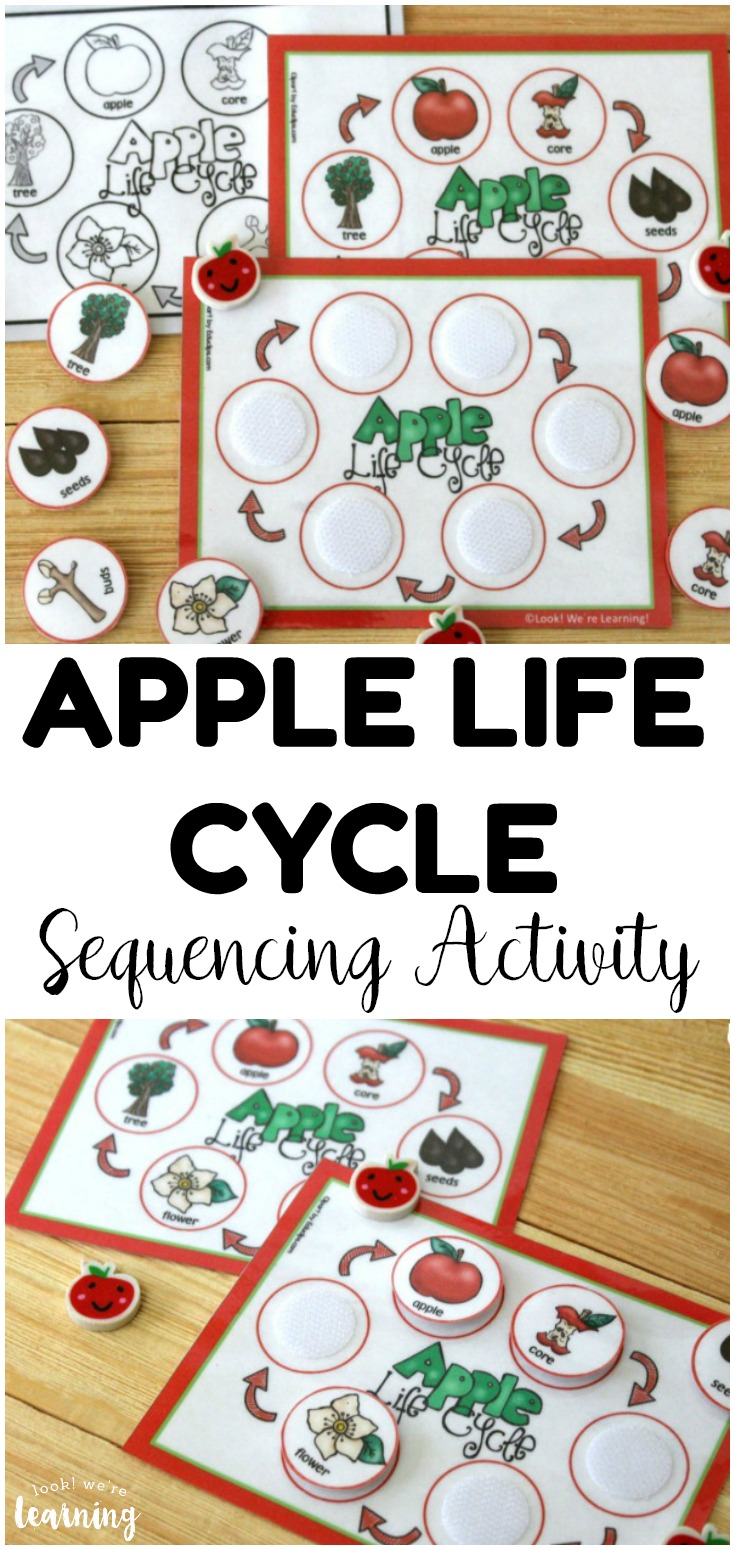 This fun, hands-on apple life cycle sequencing activity makes it easy to teach kids how apples grow! Perfect for science centers!