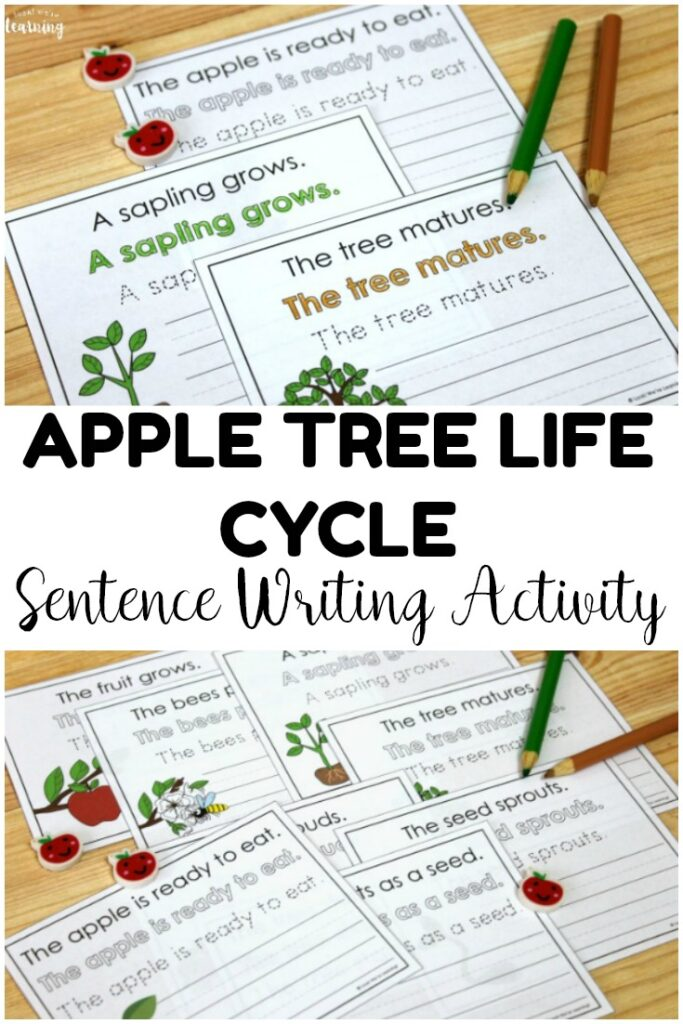 image relating to Apple Life Cycle Printable referred to as Apple Tree Everyday living Cycle Sentence Creating Game - Physical appearance! We