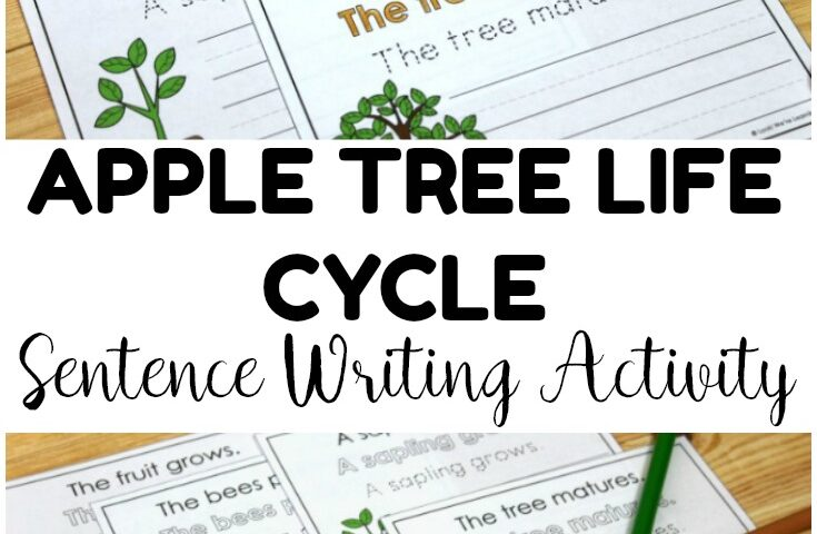 Apple Tree Life Cycle Sentence Writing Activity