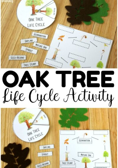 This easy oak tree life cycle activity is such a fun way to teach kids about how trees grow during fall! Take it with you on a nature walk or use at fall centers!