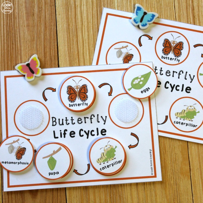 Butterfly Life Cycle Activity for Kids