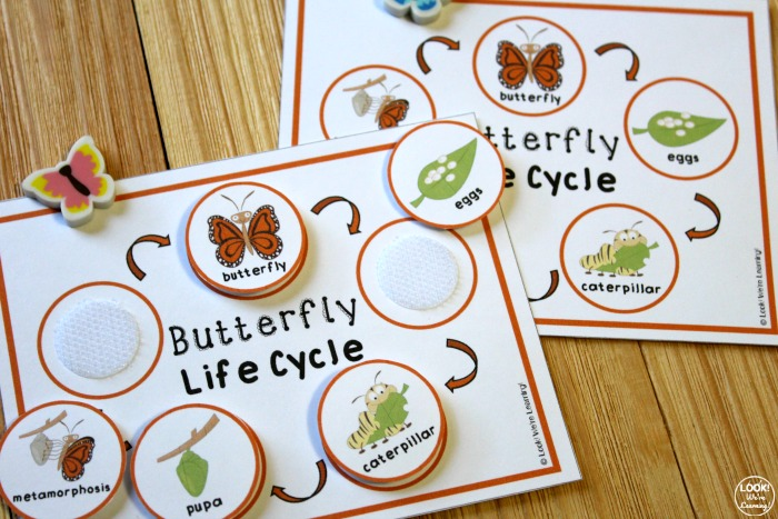 Butterfly Life Cycle Sequencing for Kids