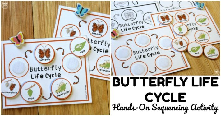 Fun Butterfly Life Cycle Sequencing Activity