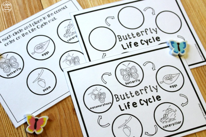 Hands On Butterfly Life Cycle Activity