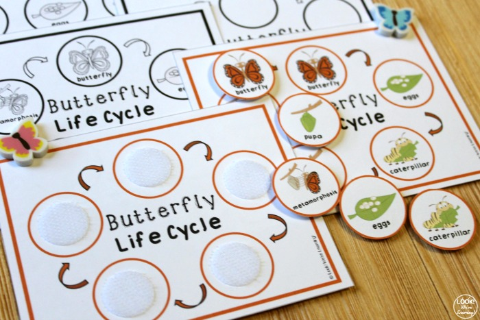Printable Butterfly Life Cycle Sequencing Activity