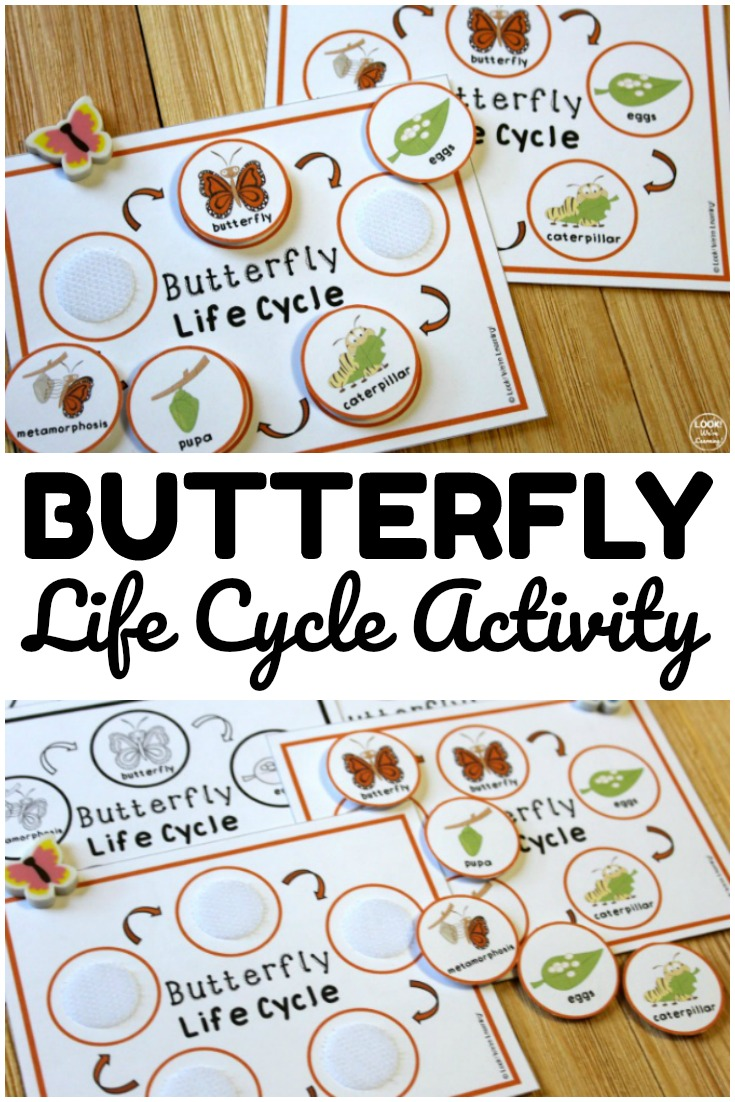 This butterfly life cycle activity is such a fun way to help kids learn how butterflies grow! Great for science during spring and summer!