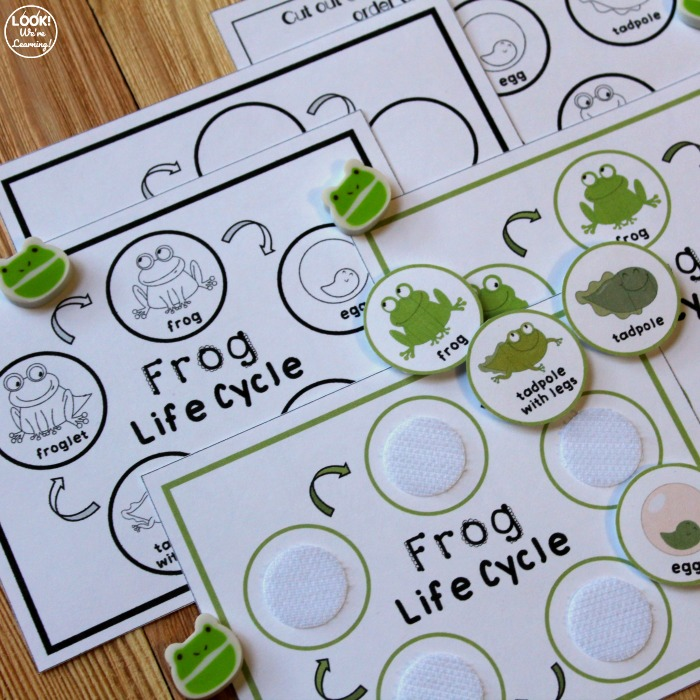Frog Life Cycle Activity for Kids