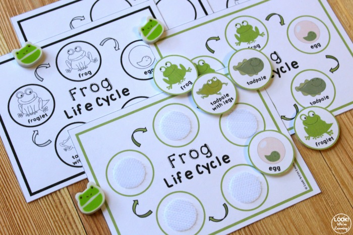 Frog Life Cycle Sequencing Activity for Kids