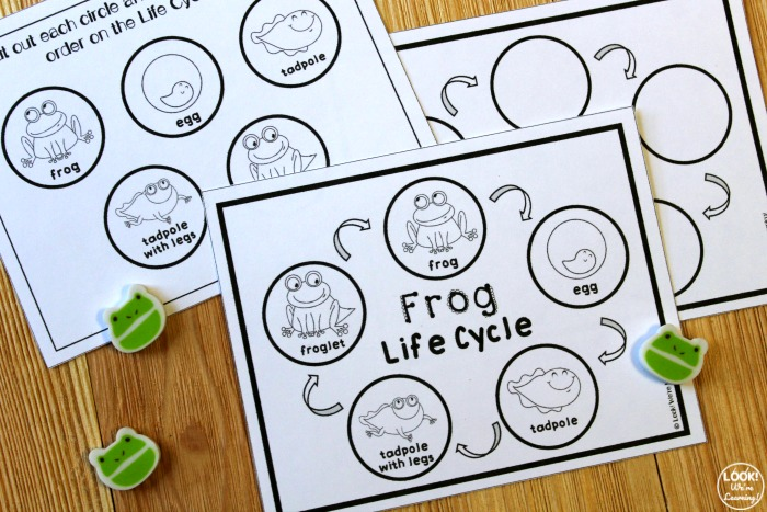 Printable Frog Life Cycle Sequencing Activity for Kids