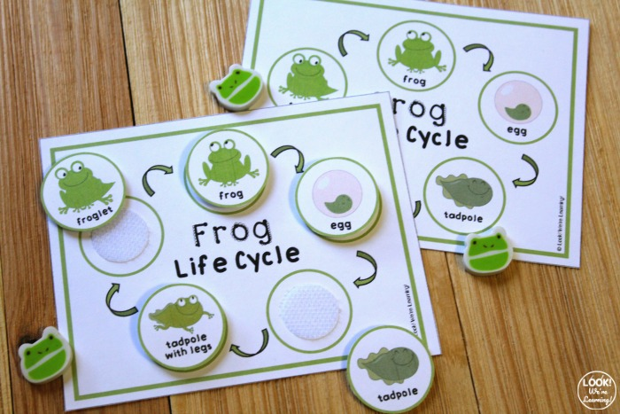 Printable Frog Life Cycle Sequencing Activity
