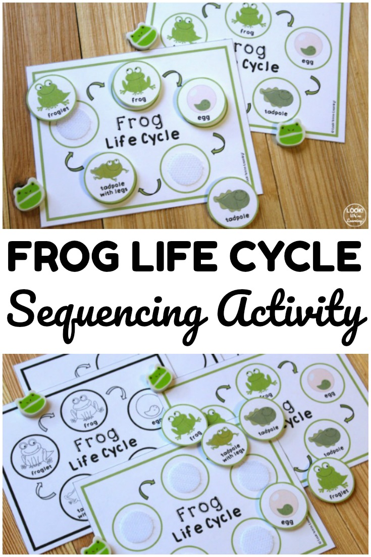 Teach students how frogs develop and grow with this printable frog life cycle sequencing activity! Perfect for hands on science lessons!