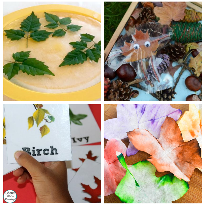 15 Simple Leaf Science Activities for Preschoolers