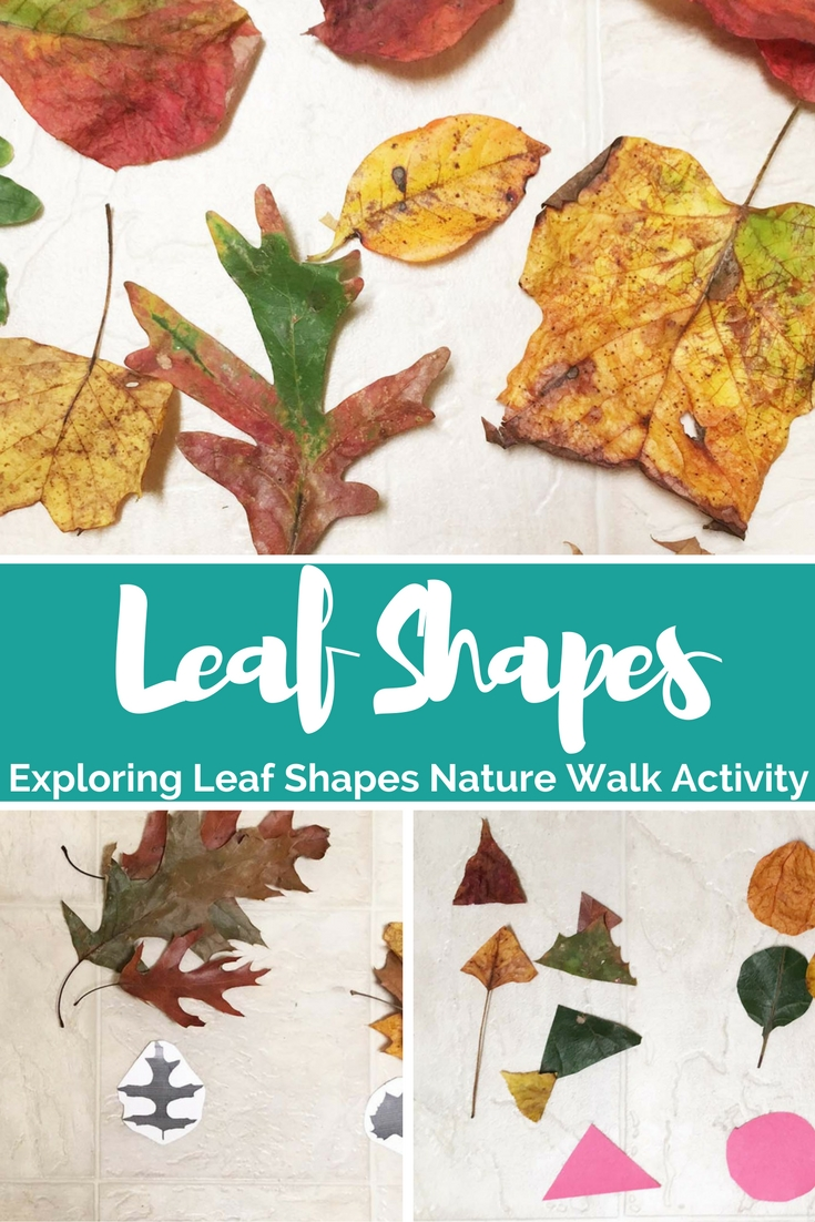 Exploring Leaf Shapes - Nature Walk Activity