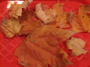 Preschool Leaf Science and Math Exploration