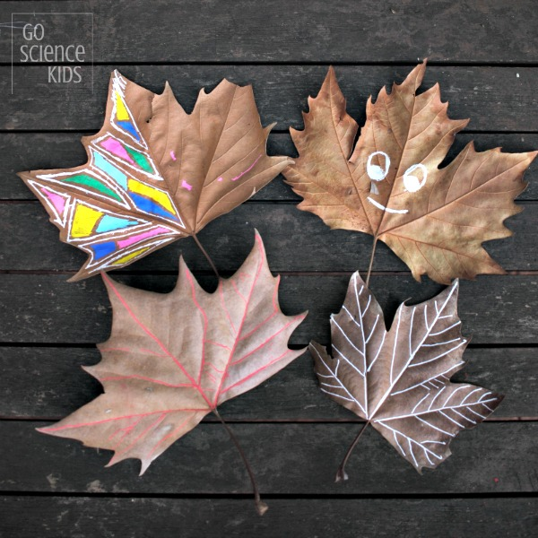 Autumn STEAM: tracing the veins of a leaf – Go Science Kids