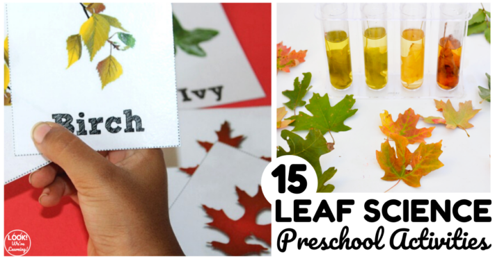 Leaf Science Activities for Preschoolers