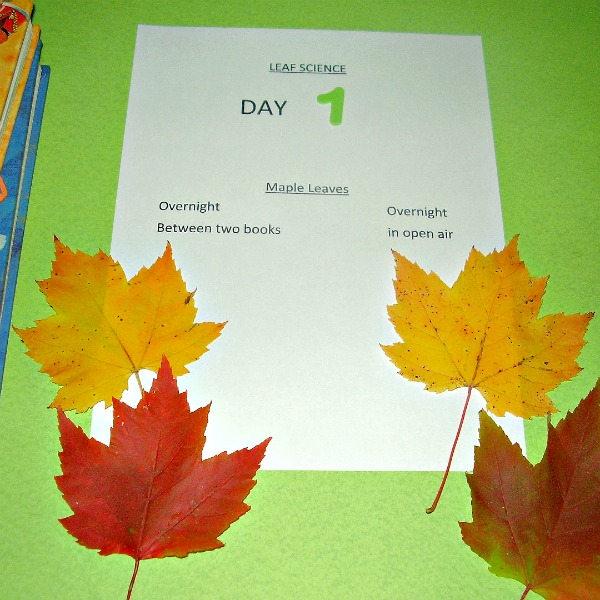 Observing Autumn Leaves Preschool Unit