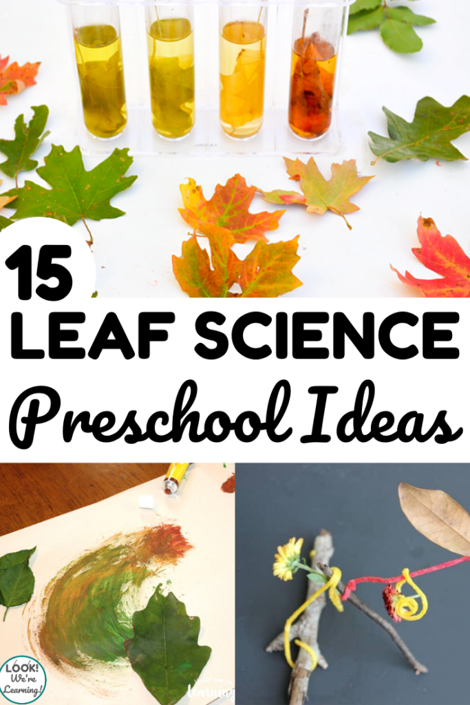 These simple leaf science activities for preschoolers are perfect for a fall science unit!