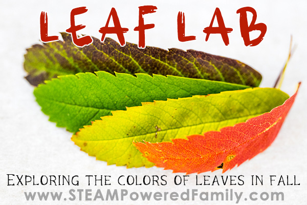 Best fall simple science for kids - why do leaves change colour?
