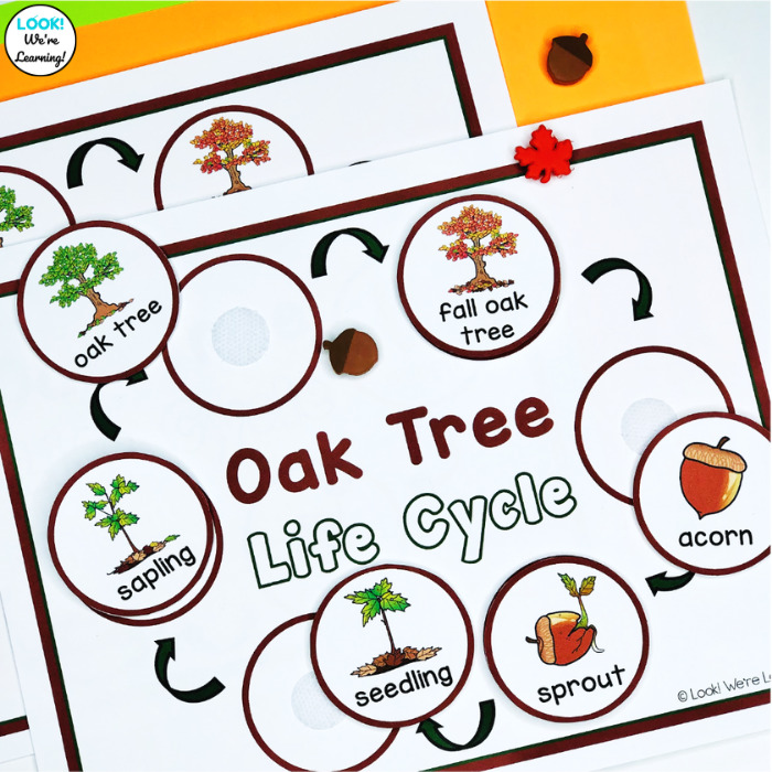 Acorn Life Cycle Sequencing Activity
