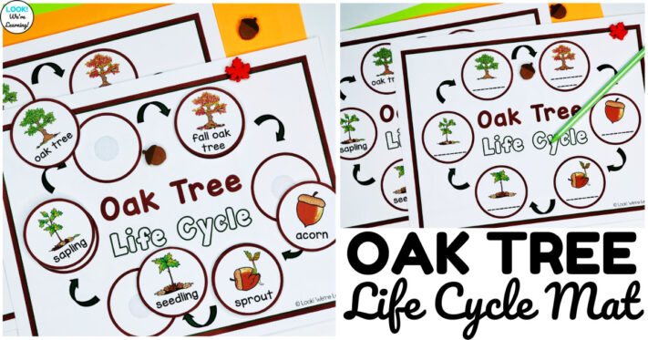 Fun Oak Tree Life Cycle Sequencing Activity for Kids