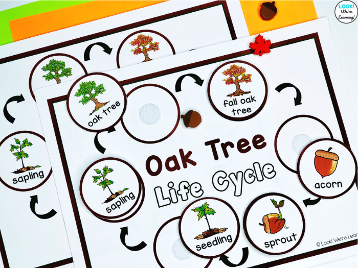 Hands On Oak Tree Life Cycle Sequencing Activity for Kids