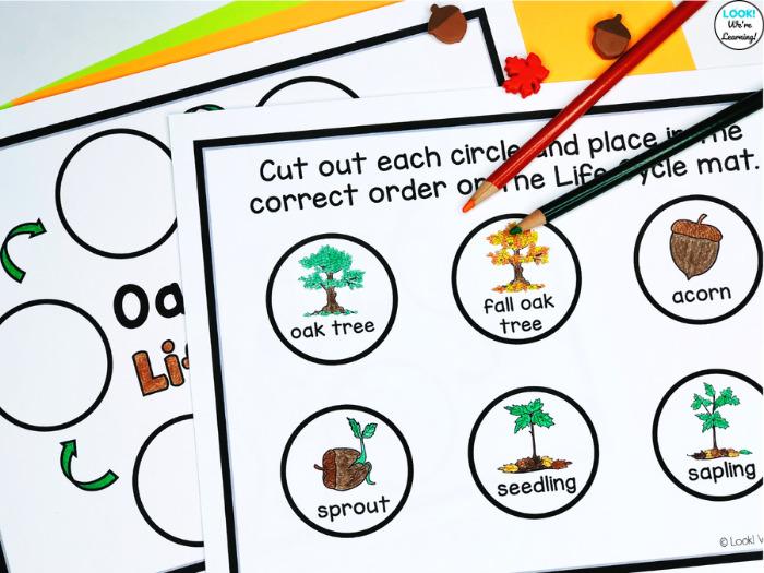 Oak Tree Coloring Life Cycle Activity