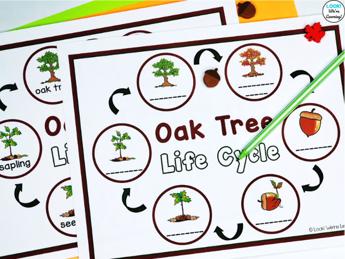 Oak Tree Label the Life Cycle Activity